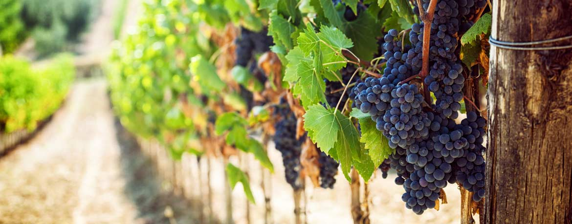 About Barossa Valley Wine Tours Make A Wonderful Vacation